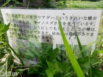 アゲハチョウ保護の看板
